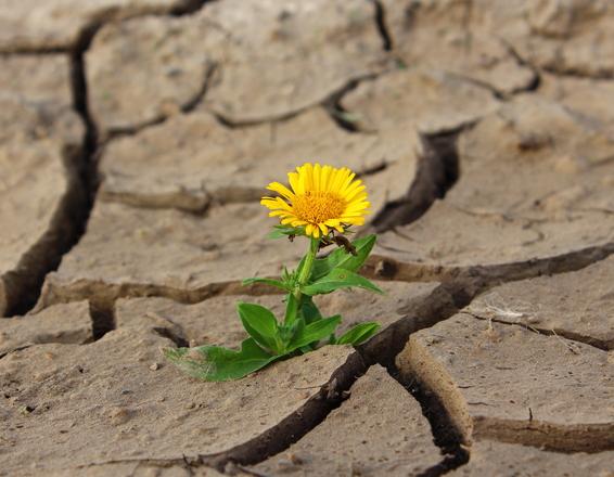 yellow-flower-1630942